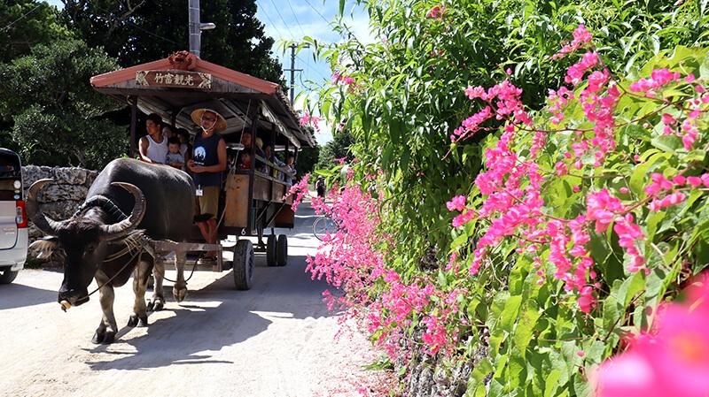 沖縄の八重山諸島、石垣島の離島、竹富島の名物、観光牛車、観光、ツアー、水牛、星のや、民宿